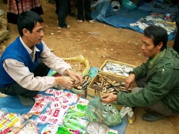 medium_vietnam1_253.jpg