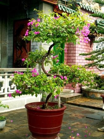 medium_vietnam3_066.jpg
