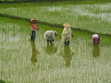 medium_vietnam3_184.jpg