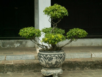 medium_vietnam_302.jpg