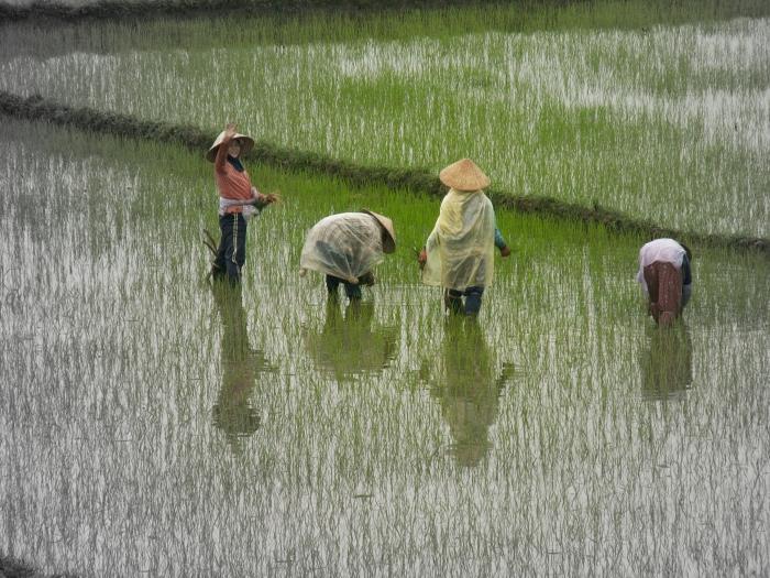 vietnam3 184a.jpg