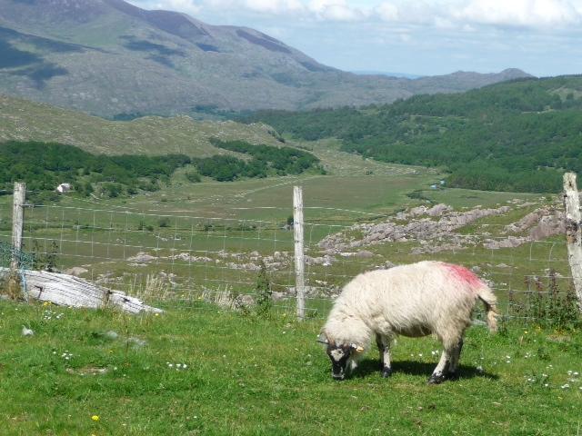 irlande114.jpg