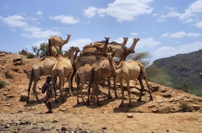 Ethio1pie 417b.jpg