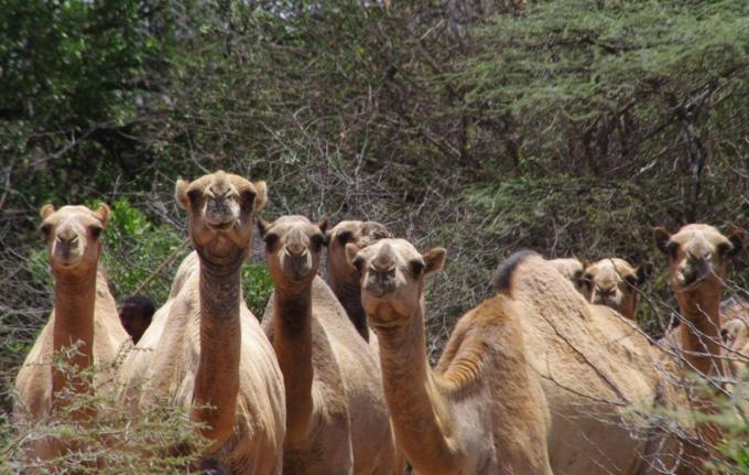 voyage, afrique, ethiopie