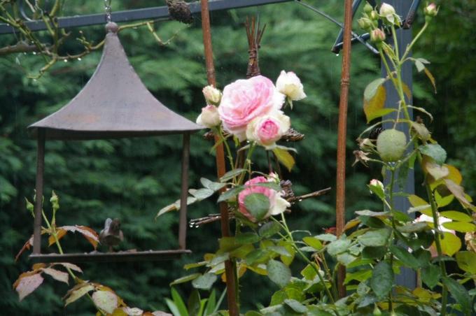 Jardin 001a.jpg