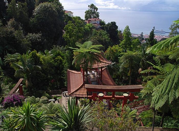 voyage,madere,monte,jardin tropical
