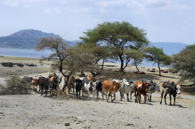 Ethio2pie 066a.jpg