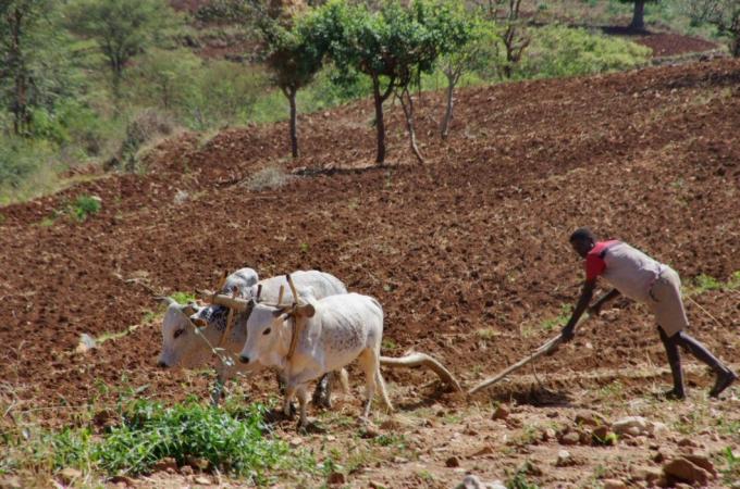 Ethio1pie 398a.jpg