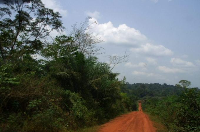 Cameroun 125b.jpg