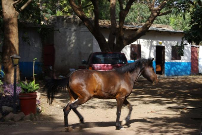 Ethio2pie 150a.jpg
