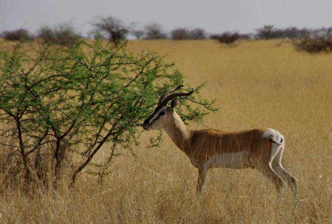 Ethio2pie 235b.jpg