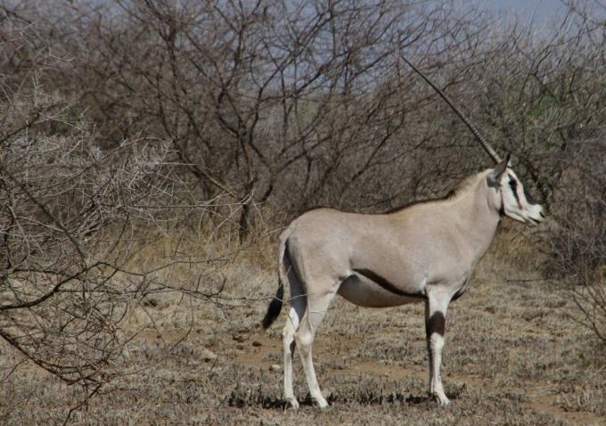 Ethio2pie 205b.jpg