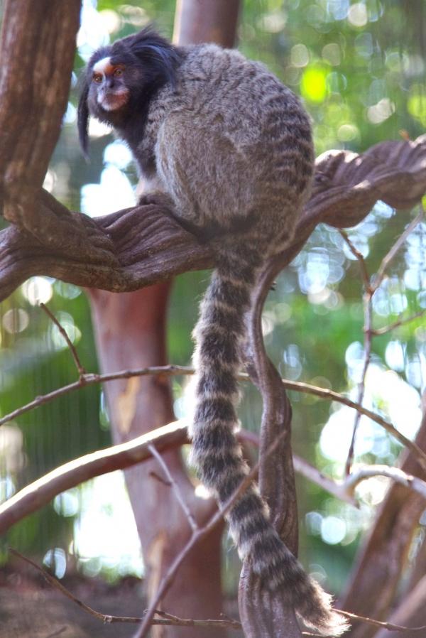 brésil, foz do iguaçu, parque das aves
