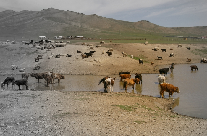 photos, voyage, mongolie