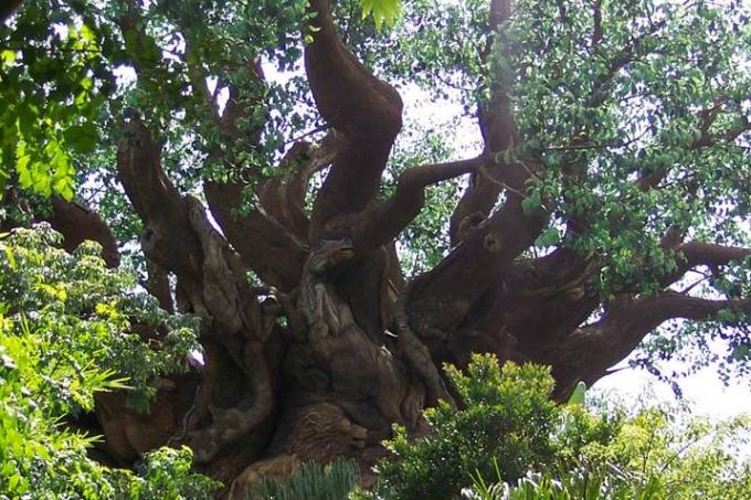 arbre10.jpg