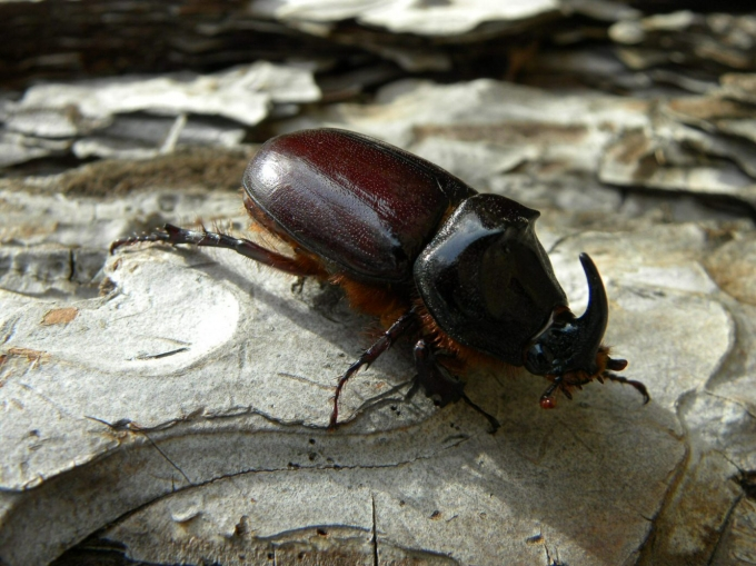 scarabee.jpg