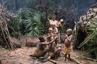 voyage, cameroun, réserve, dja, pygmées