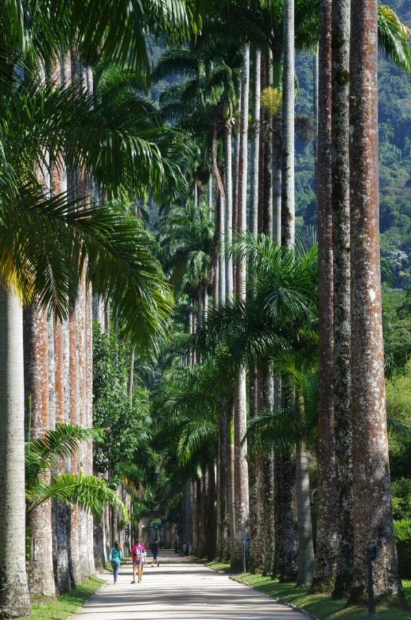 voyage, bresil, rio de janeiro, jardin botanique