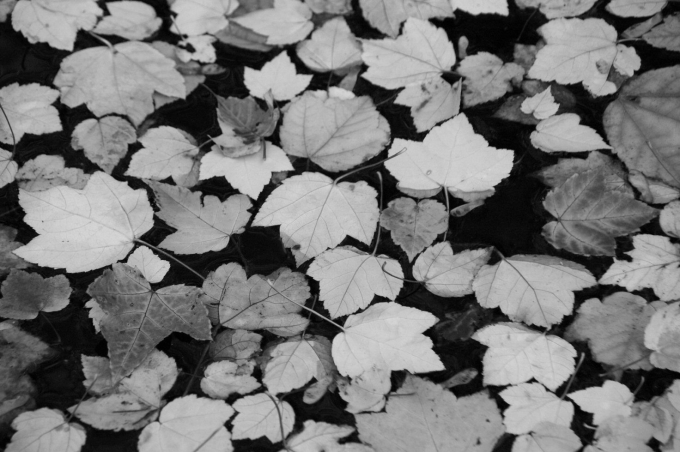 Botanique 108a.jpg