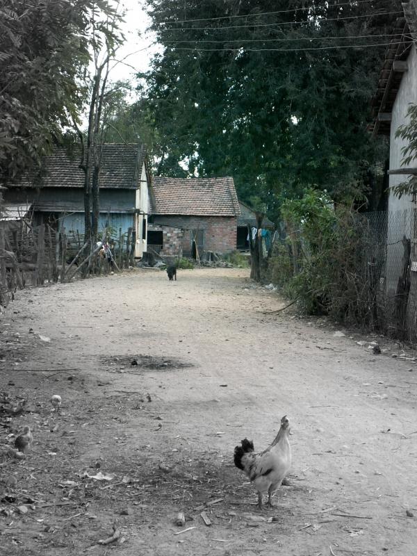 vietnam3 255a.jpg