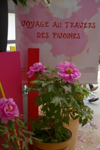 pivoines1.jpg