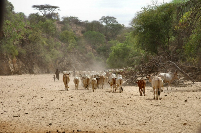 Ethio1pie 321a.jpg