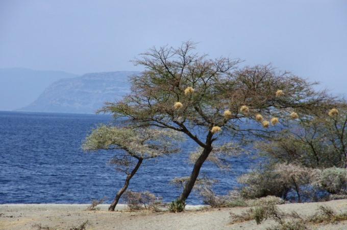 Ethio2pie 074a.jpg