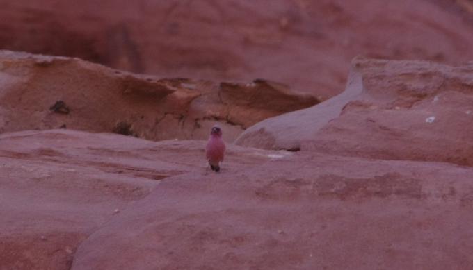 voyage,jordanie,désert,wadi rum