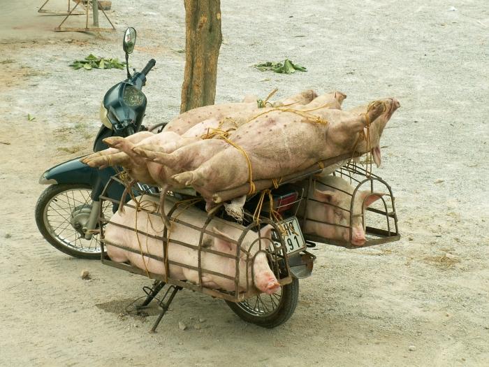 vietnam1 018.jpg