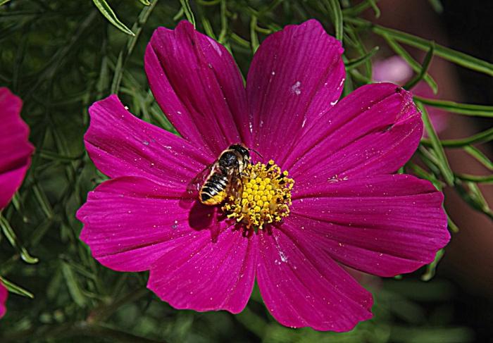 nature, jardin, fleurs