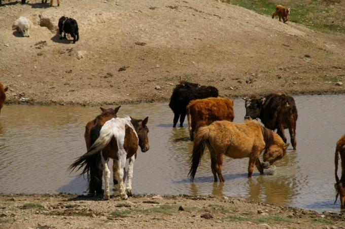 Mongolie 129a.jpg