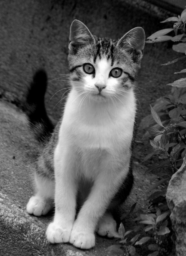 chaton1.jpg